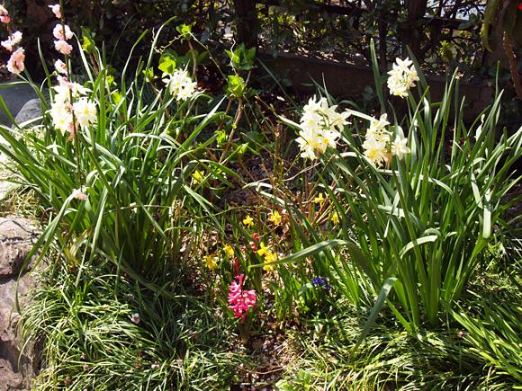 庭のサプライズ