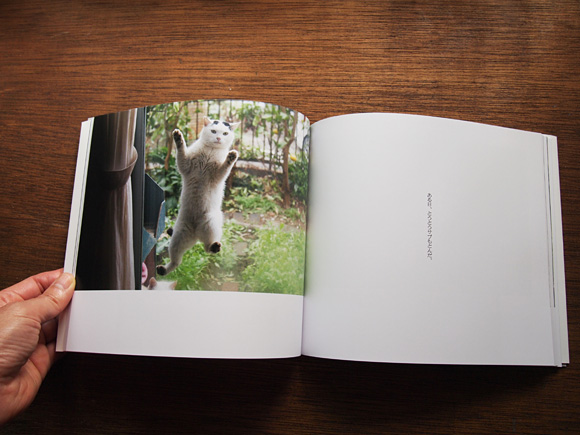 安彦幸枝さんの『庭猫』