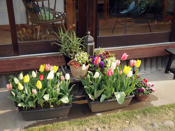 春色の庭 1