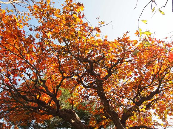 秋の終わりと『暮しの手帖 85号』