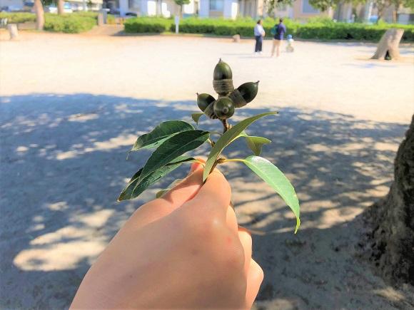 autumn_tree01.jpg
