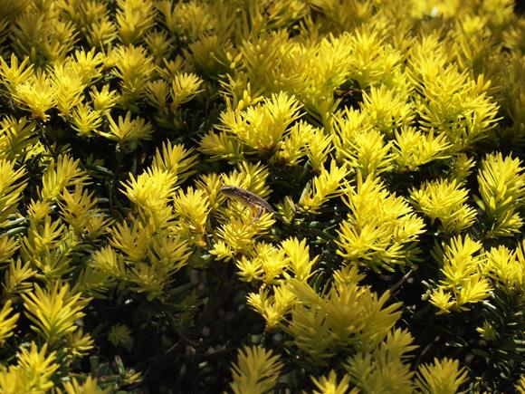 garden_friend002.jpg