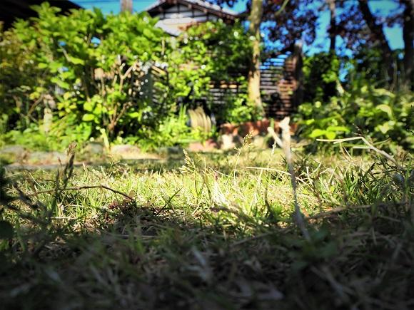 garden_picnic0003.JPG