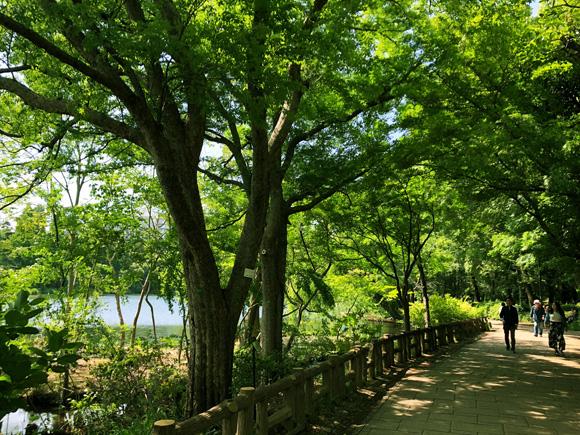 inokashira_park001.jpg