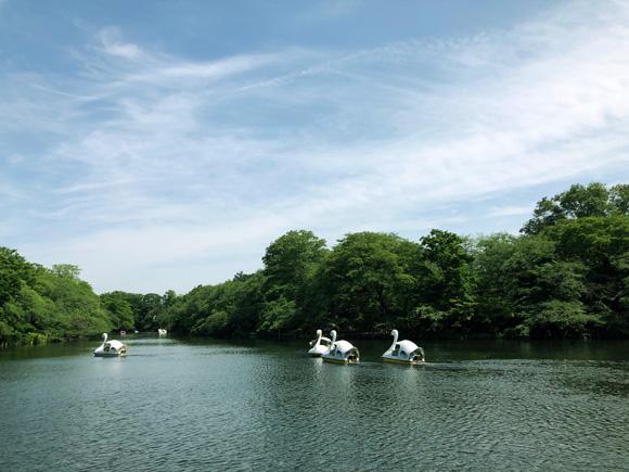 inokashira_park007.jpg