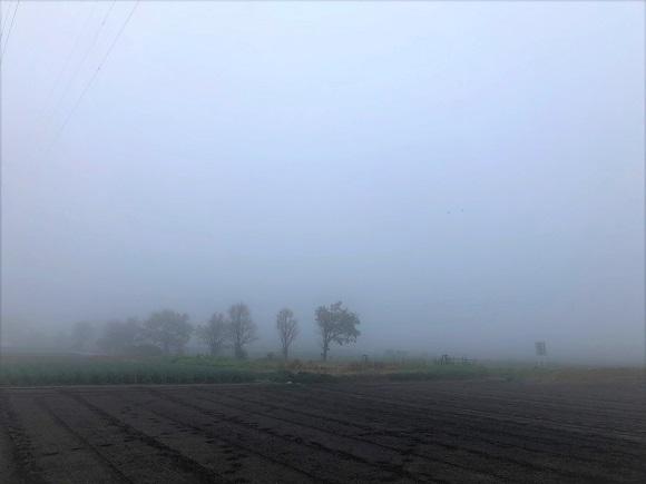 misty_morning001.jpg