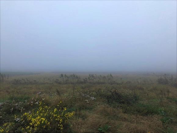 misty_morning002.jpg