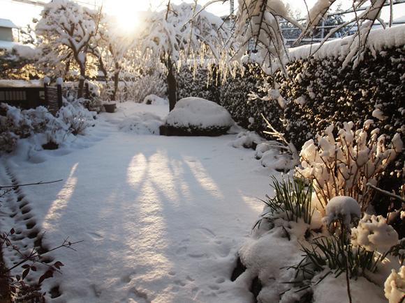 snow_woods002.jpg