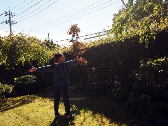 摘み立て落花生と木枯らし1号